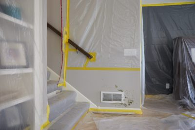 Mold Removal Charleston