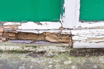 flood damage - dry rot